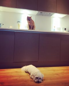 pets are welcome at Fizzy Living
