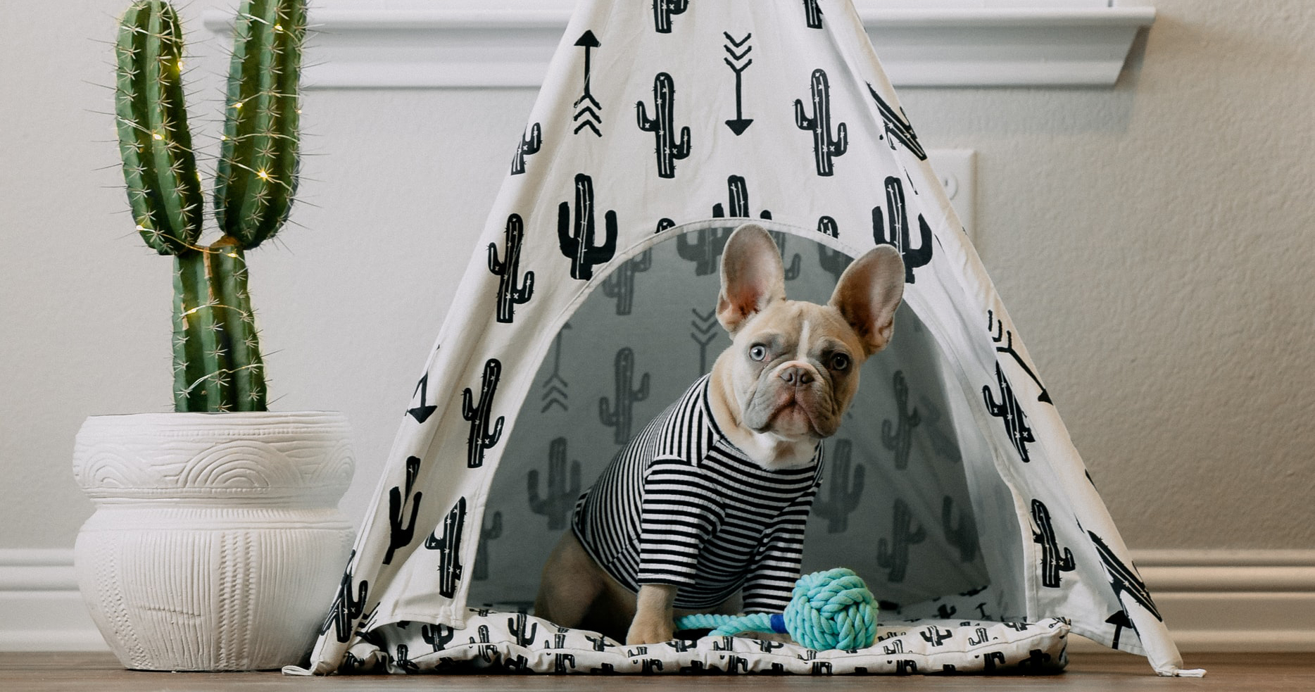 dog in a tent in a rental property that allows pets