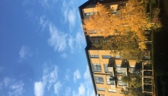 User submitted image of Bermondsey Spa, SE16