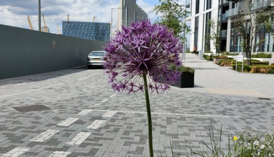 User submitted image of No.5 Upper Riverside, Greenwich Peninsula, SE10